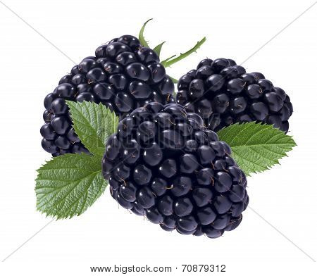Black Raspberry Isolated On White Background