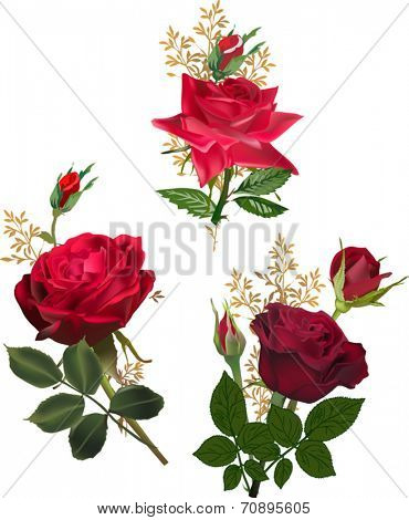 illustration with three rose flowers isolated on white background
