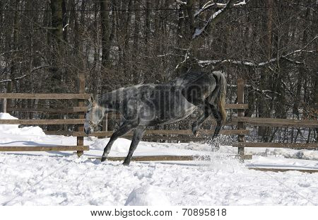 Funny gray horse at winter time