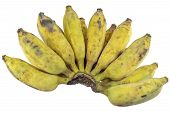 picture of banana  - Bananas Cultivated Banana Thai cultivated banana Thai bananas on on white background. ** Note: Soft Focus at 100%, best at smaller sizes - JPG