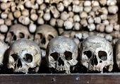 stock photo of eye-sockets  - Human skulls in the basement crypt. Soft focus