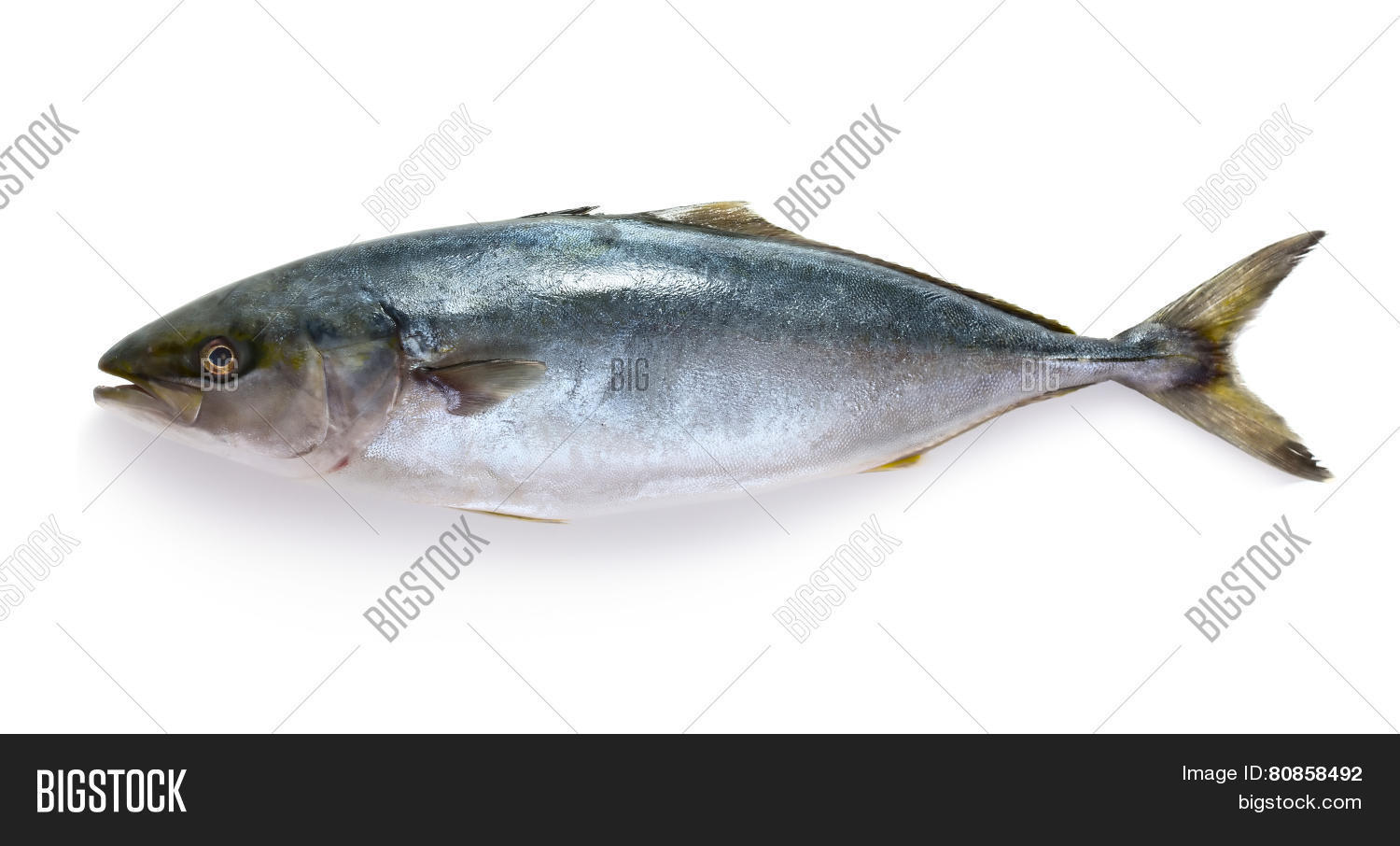 Raw tuna fish stock photo stock images bigstock for Is tuna fish good for you
