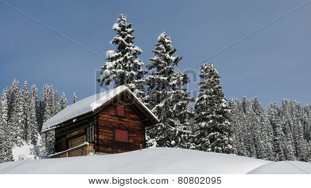 Little Chalet And Firs