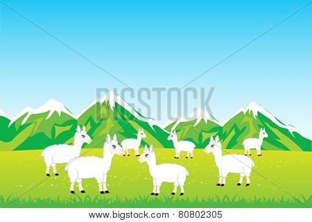 Herd sheep in field