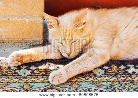 Lazy Red Cat Is Sleeping Stretched His Legs