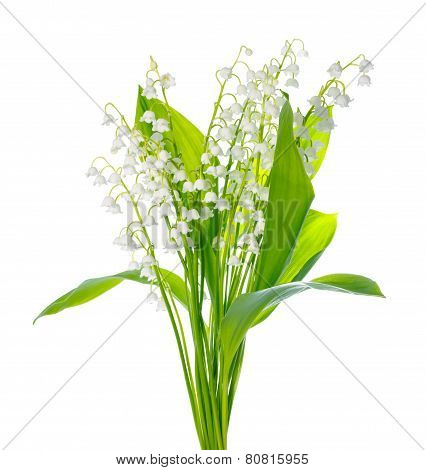 Beautiful Bouquet Of Lily The Valley Flower Is Isolated On White Background