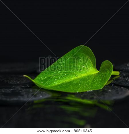 Beautiful Spa Concept Of Green Leaf Calla Lily On Zen Basalt Stones With Dew In Ripple Reflection Wa