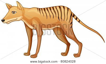 Illustration of a close up tasmanian tiger