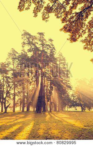 Morning sun beams in the autumn park