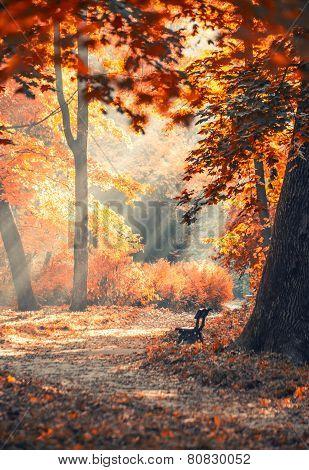 Morning sun beams in the foggy autumn park