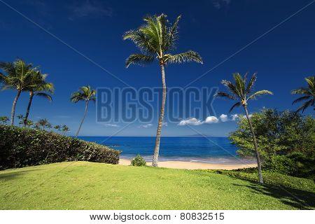 Palm tree in front of Ulua Beach, south Maui, Hawaii, USA