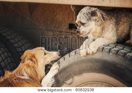 Cute Romantic Brown Dogs Looking At Each Other