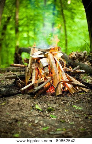 Beautiful Fire In The Forest