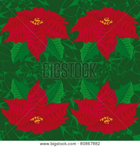 Seamless green background.red flowers of poinsettia .
