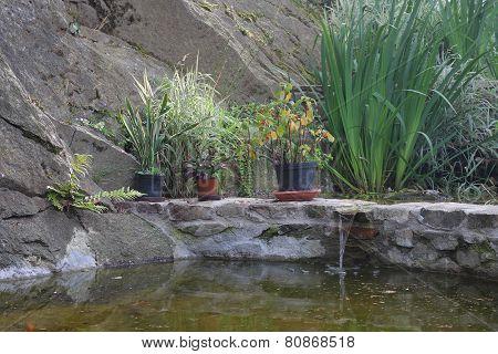 Water Lake  In Garden
