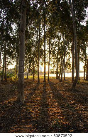 Shadows, Trees, Sun, Reflections, Dawn.