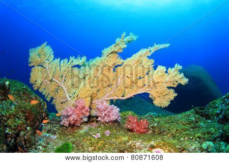 Tropical Coral reef with fish underwater