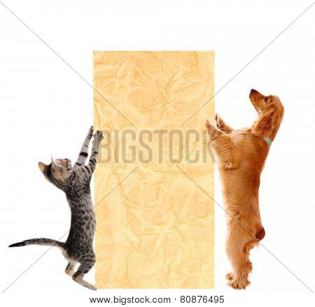Beautiful cocker spaniel and kitten with empty sheet of paper, isolated on white
