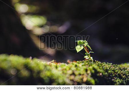 Little Plant Under The Jungle