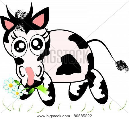 Cute Cow Eating Grass