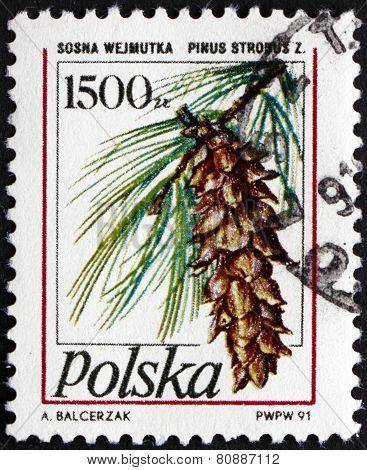Postage Stamp Poland 1991 Eastern White Pine, Tree