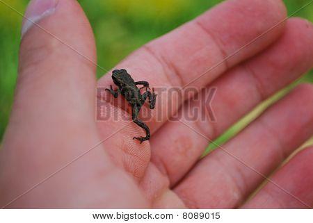 Tiny Froglet