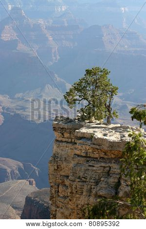 Tree Overlooking The Grand Canyon