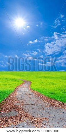 road among a fields