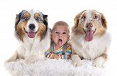 stock photo of baby dog  - three months baby and dogs in front of white background - JPG