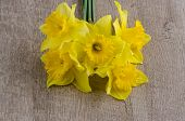 image of jonquils  - Closeup of yellow jonquil flowers on wooden background - JPG