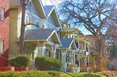 pic of row trees  - Row of older homes taken in a Denver - JPG