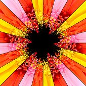picture of rebs  - Flower Center Symmetric Collage Made of Collection of Gerbera Flowers - JPG