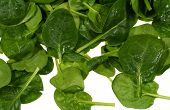 picture of leafy  - Fresh spinach it is a leaf vegetable or leafy green - JPG