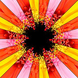 image of rebs  - Flower Center Symmetric Collage Made of Collection of Gerbera Flowers - JPG