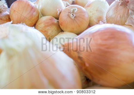 Fresh Onion On Farm Display