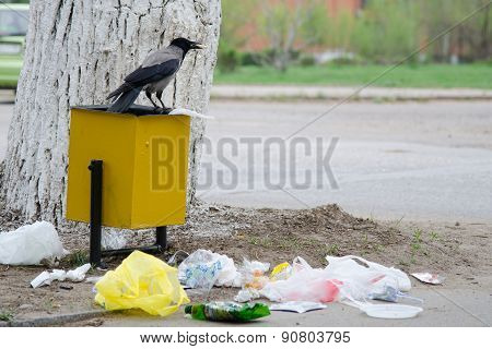 Crow Has Found A Morsel Of Food In Garbage Urn