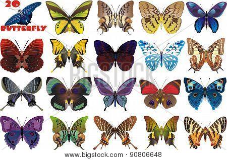 A Set Of Beautiful Butterflies [