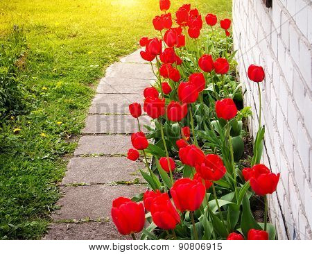 Tulips growing near a house