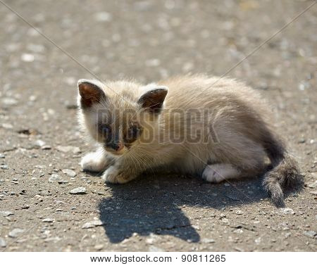 Kitten Sitting On The Ground