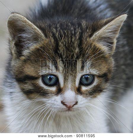 Baby cat.
