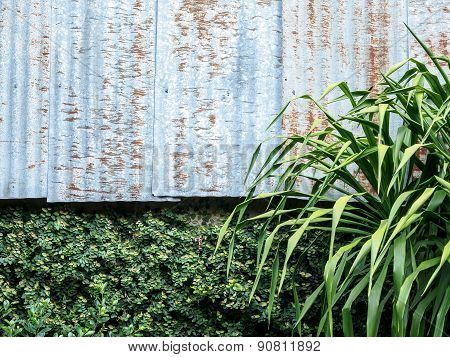 Zinc Wall And Green Leaves