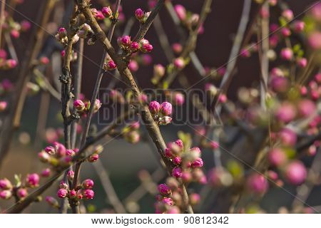 Decorative Almonds Buds