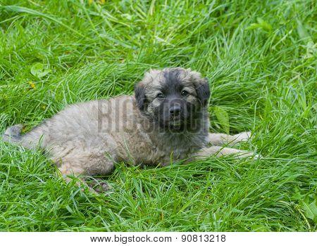 Stray puppy having rest in the fresh grass