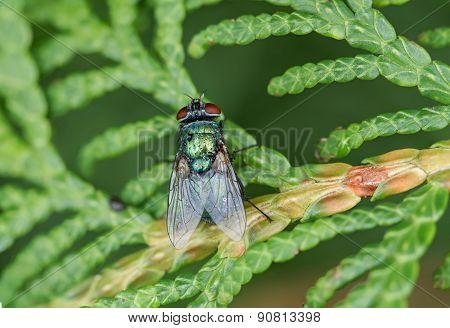 Big Fly Macro