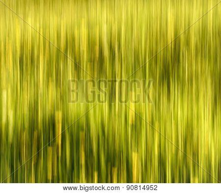 Blurred Summer Meadow