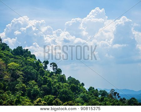 Tropical Forests And Cloudscape