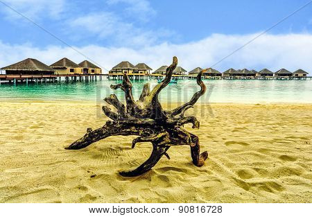 Tree branches on the beach in Maldives