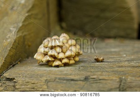 Brown Mushrooms On Wooden Background