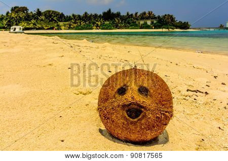 Coconut On The Beach In Maldives That Looks Like A Human Face