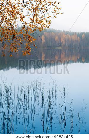 Autumn Yellow Birch Leaves Over Still Lake Water